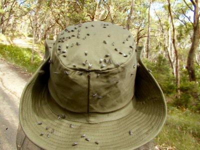 Hut mit Muecken