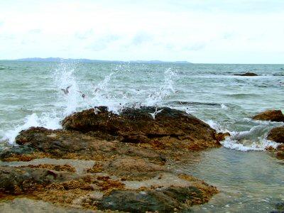 Moewen und Meer
