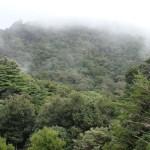 Santa Elena – mitten im Nebelwald