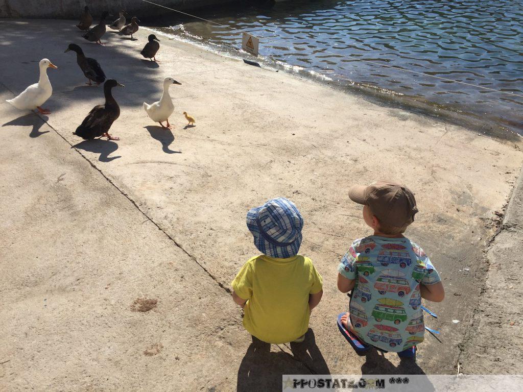 Ànec - wie der Katalane zur Ente sagt.