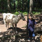 Günstiger Ausflugstipp für Familien: Wildpark Pforzheim